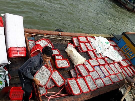 Người tiêu dùng đã yên tâm tiêu thụ các sản phẩm hải sản, hệ sinh thái biển, nguồn lợi thủy sản bị tổn thương đã bước đầu phục hồi.