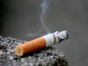 nồng độ nicotin trong thuốc lá