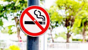 hình ảnh cây thuốc lá
